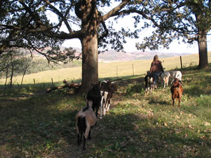 Burr-oaks-&-goats-with-view-optimized
