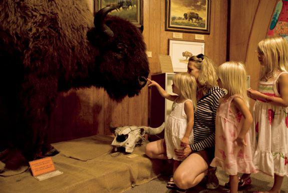 gl-070825_buffalo_museum_102LR