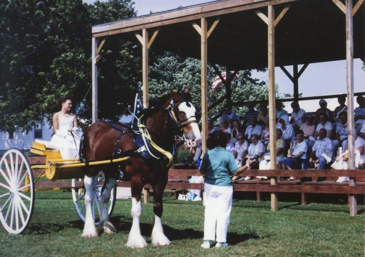 Clydesdale 2