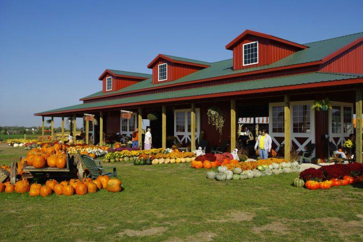 harvestville-farm